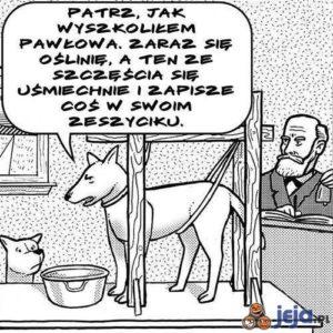 Pies pawłowa